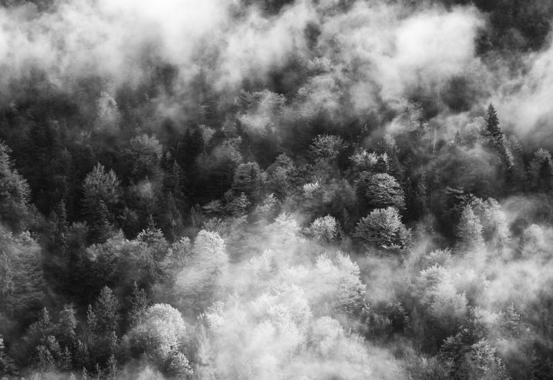 footer_ness_misty-forest